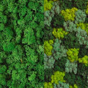 verde per interni